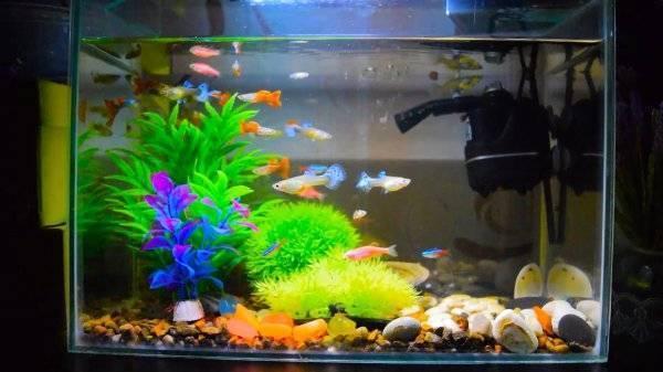 Как чистить аквариум в домашних условиях - важные правила и советы новичкам