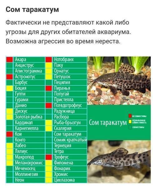 Аквариумные раки: содержание, совместимость, размножение, виды | блог аквариумиста