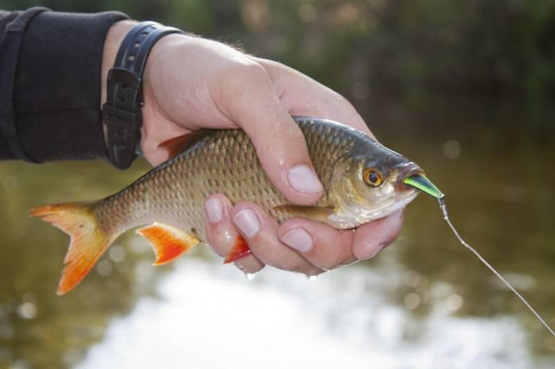 10 советов по ловле сига – рыбалке.нет