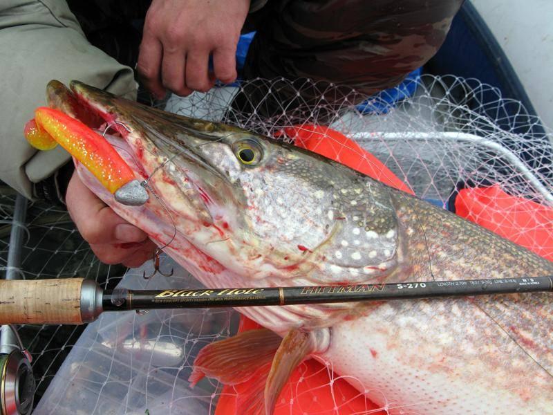 Как поймать щуку на спиннинг летом: приманки для рыбалки, на что лучше клюет
