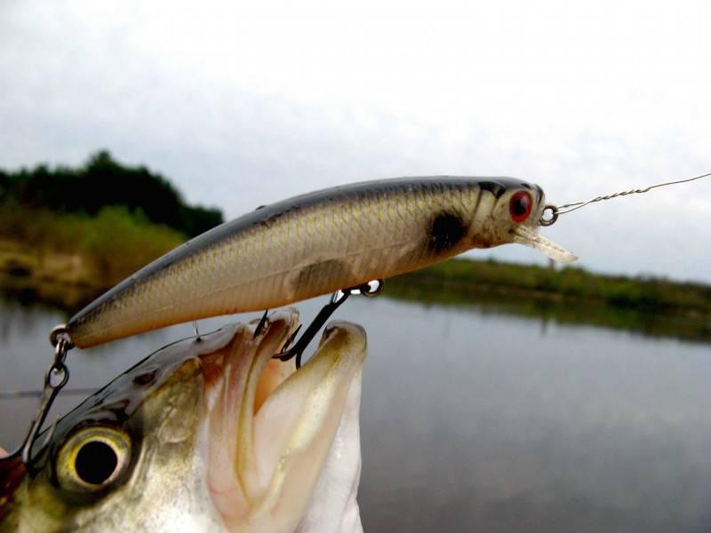 10 лучших воблеров для продуктивной рыбалки: для троллинга, на судака, окуня, щуку, голавля и др. | рейтинг 2020 +отзывы