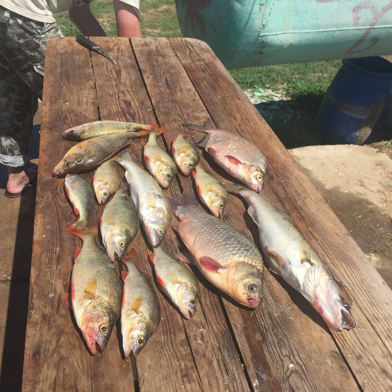 Осенняя рыбалка в астрахани на нижней волге и ахтубе: в сентябре, октябре и ноябре