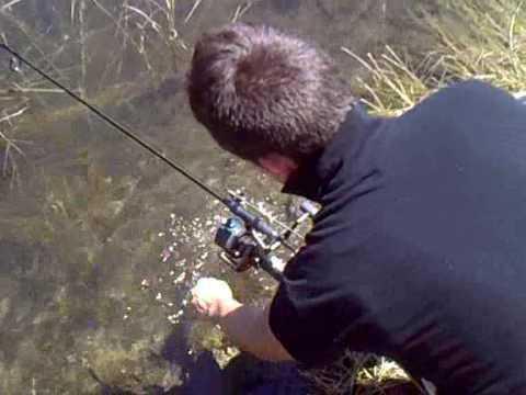 Ловля амура: снасти, приманки, техники ловли