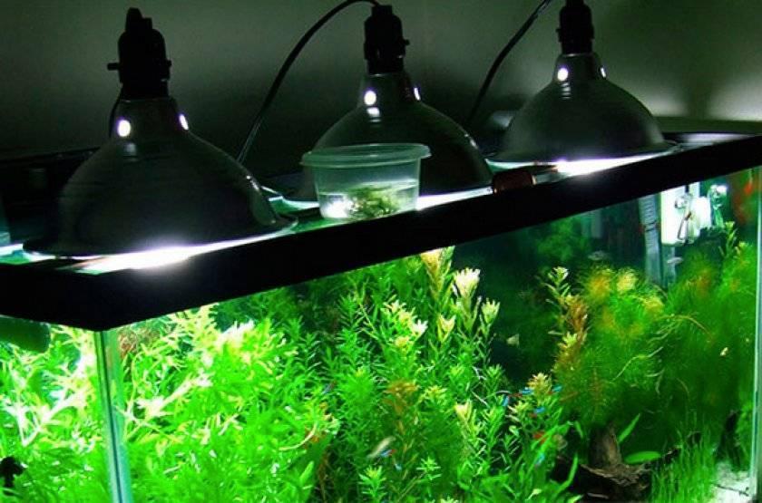 Как правильно выбрать лампы для аквариума