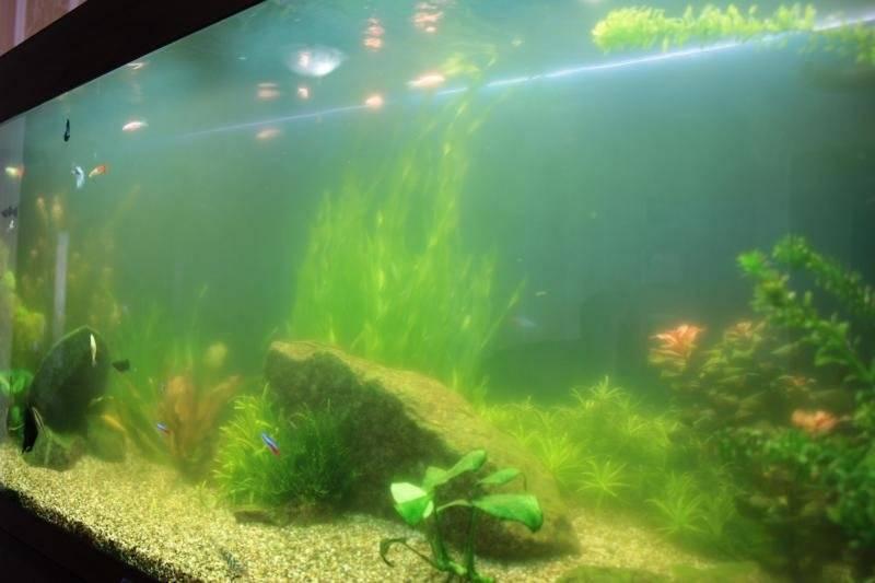 Вода в аквариуме после запуска стала мутной: причины и способы их устранения