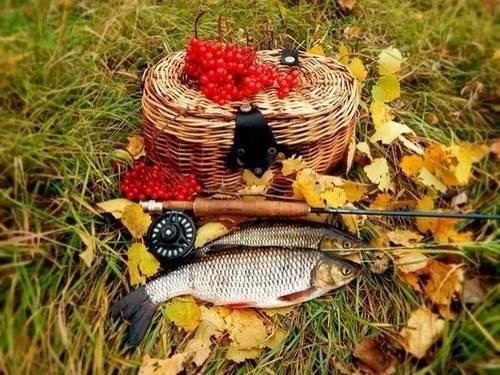 Ловля сига осенью — успешные приемы, снасти