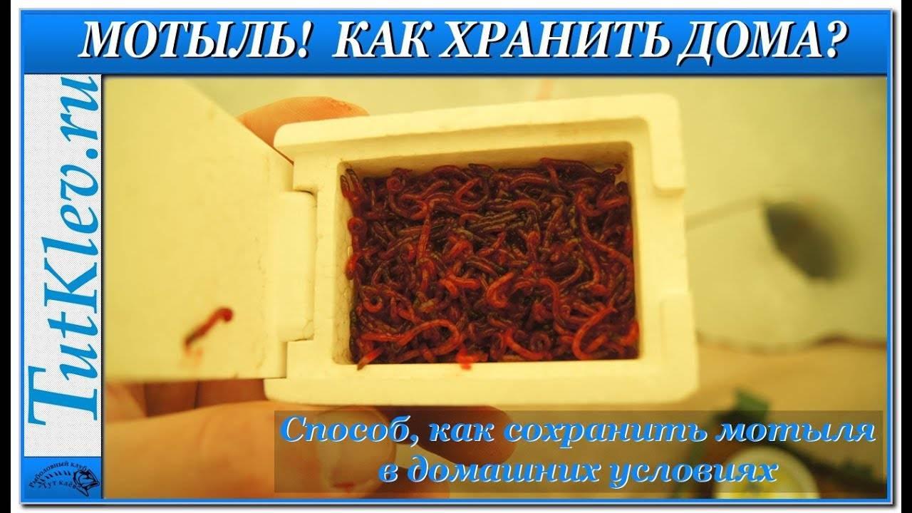 Как хранить мотыля на рыбалке и в домашних условиях
