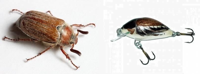 Как избавиться от майского жука и его личинок: способы и средства борьбы