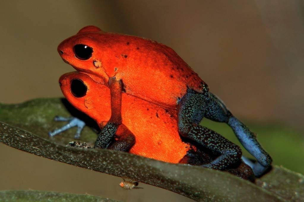 Самые необычные лягушки в мире - 1