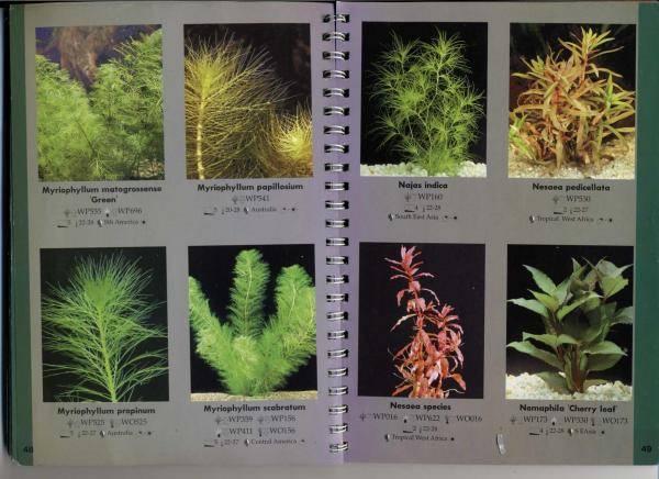 Низкорослые растения для аквариума: особенности и виды