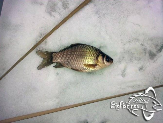 Рыбалка на истринском водохранилище платная и бесплатно, весной, летом, зимой, отзывы и отчёты про рыбалку, места для проживания, домики