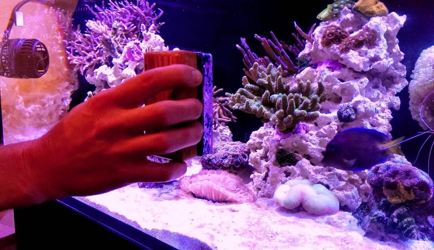 Как чистить грунт в аквариуме без сифона: как кипятить не сливая воду, нужно ли промывать песок, что делать с растениями, сколько раз в год требуется уборка дна?