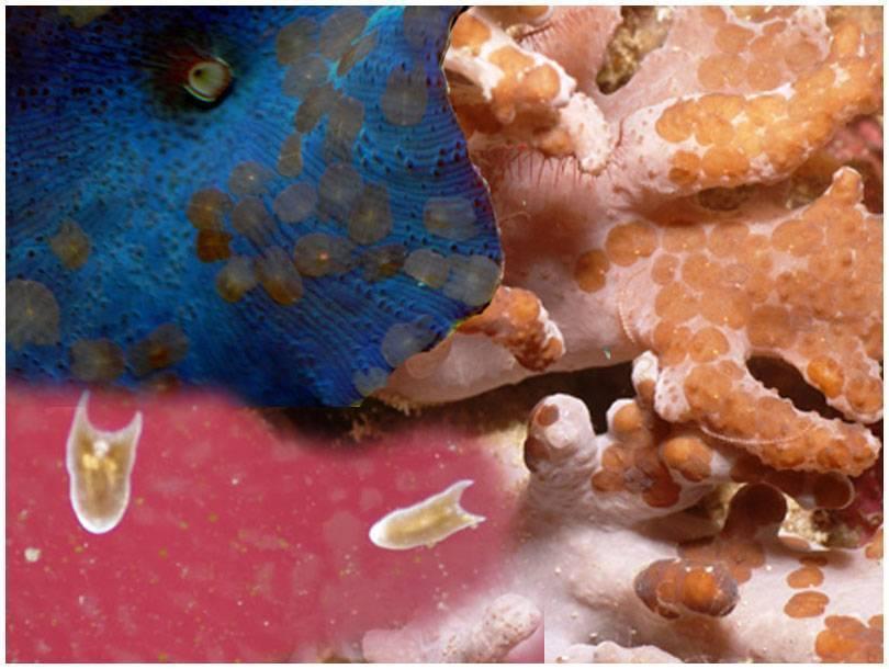 Нематоды в аквариуме как избавиться