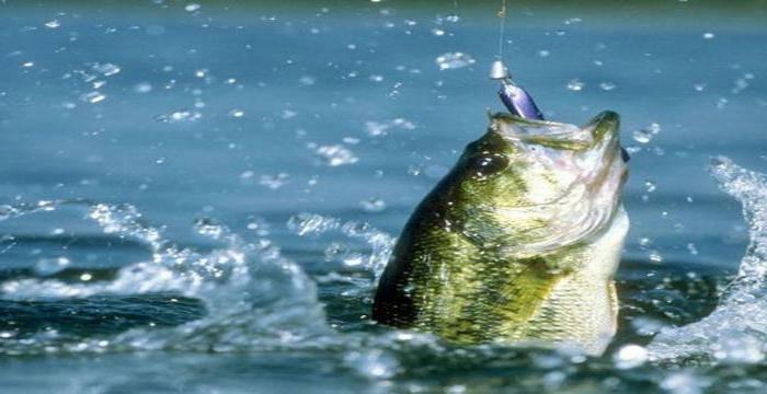 Три пескаря - платная рыбалка в лыткино без нормы вылова