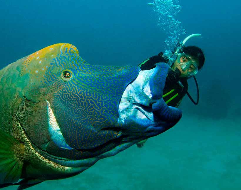 Топ-10 самых крупных пресноводных рыб мира (10 фото) — нло мир интернет — журнал об нло