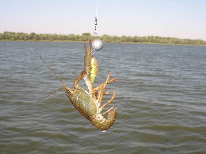 Рыбалка на нижней волге. пойма нижней волги и ахтубы...