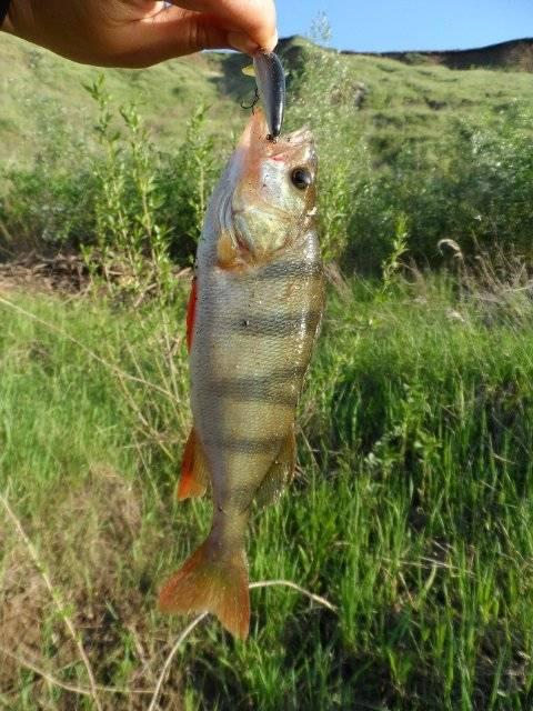 Рыбалка на красивой мече — важные особенности