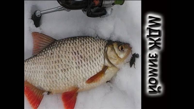 Рыбалка на северском донце - мой туризм