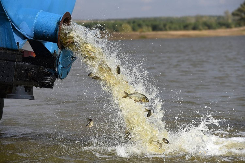Почему необходимо есть рыбу и какая наиболее полезна. 21.by