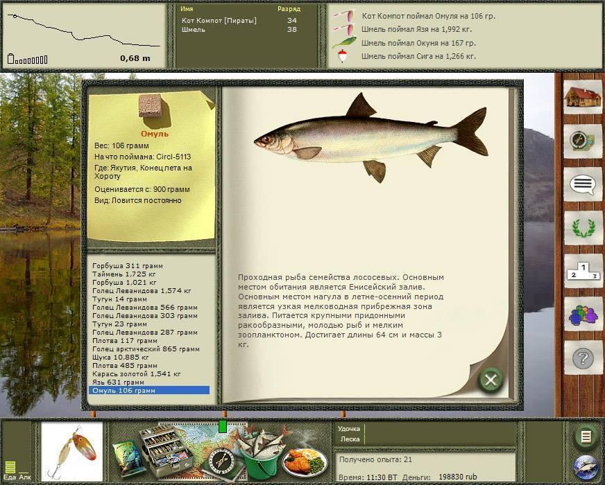 Вываживание  крупной рыбы