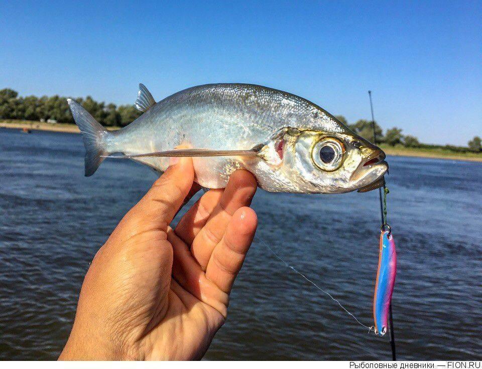 Современная поплавочная снасть для рыбалки на волге. часть ii - рыбалка на ахтубе с комфортом - база трёхречье