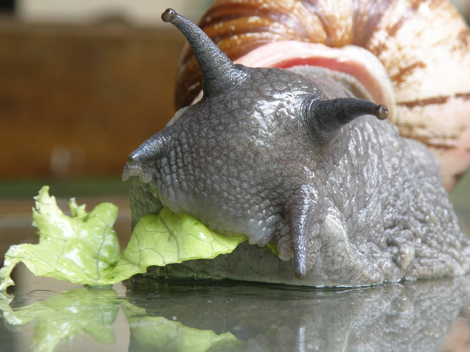 Что едят улитки? 22 фото чем их кормить в домашних условиях? чем питаются в природе уличные улитки? какой у них тип питания? можно ли давать в качестве корма кормовой мел?