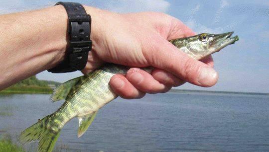 Озера свердловской области для отдыха с детьми, купания, рыбалки