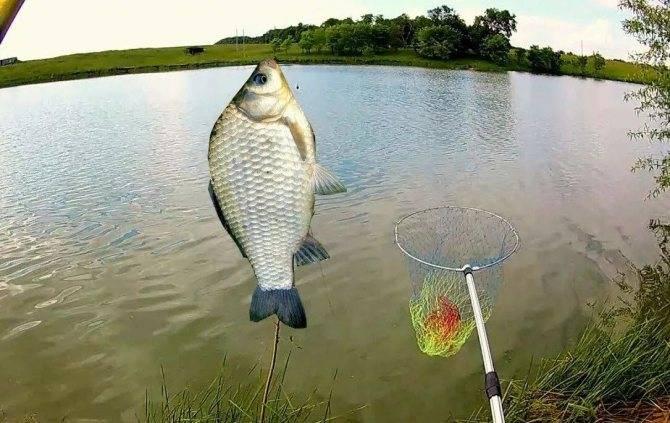 Рыбные места в новосибирской области, вести с водоемов