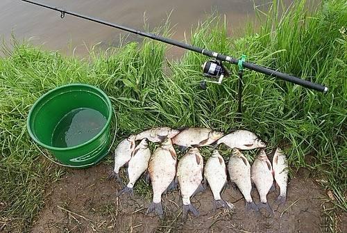Ловля плотвы весной: в чем особенности сезона, основные секреты успешной рыбалки