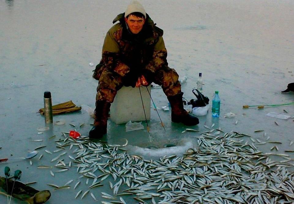 Ловля корюшки зимой: как выбрать удочку и снасти для успешной рыбалки, на какую наживку и приманку ловить