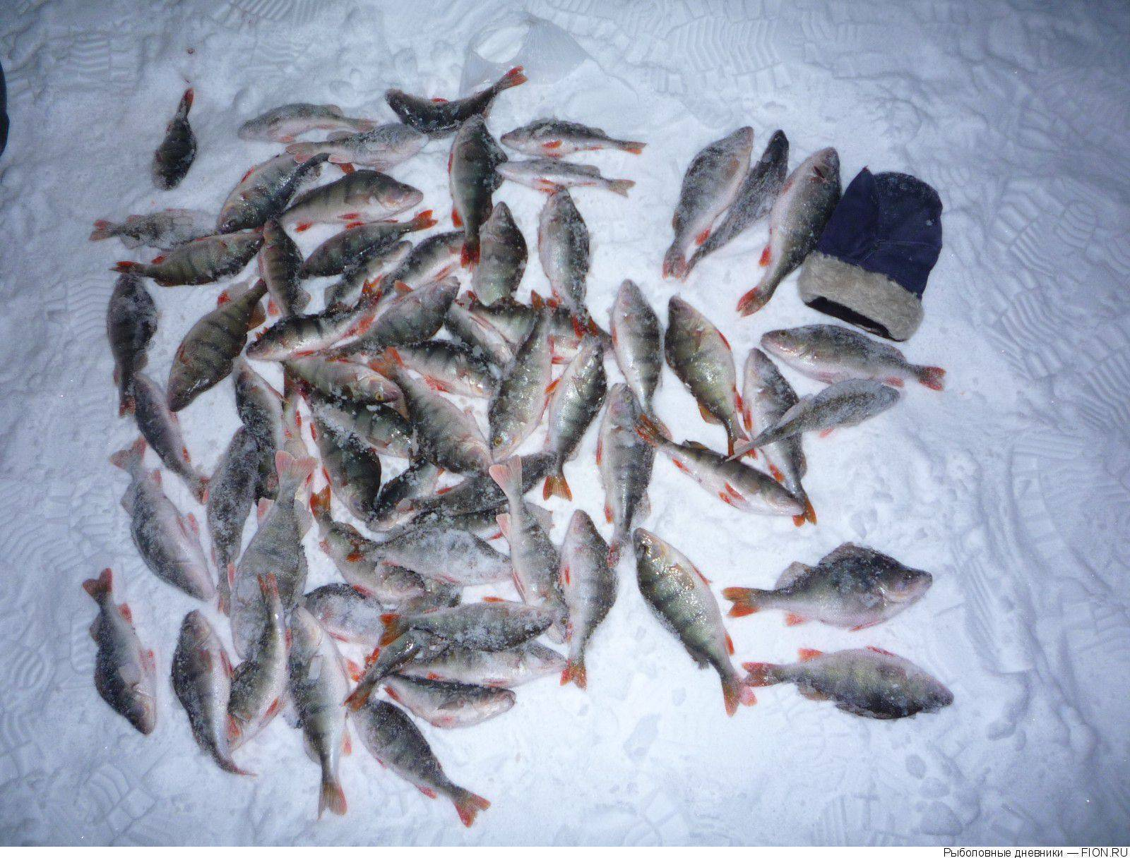 Ик озеро - читайте на сatcher.fish
