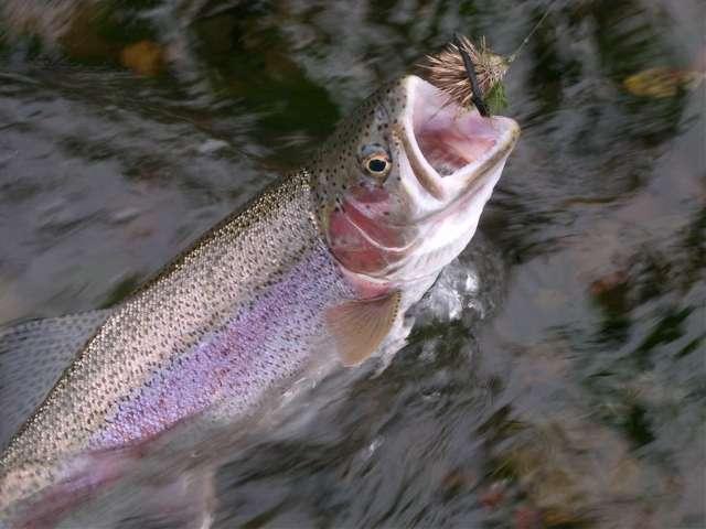 Рыба чавыча: характеристика, размножение, снасти для ловли
