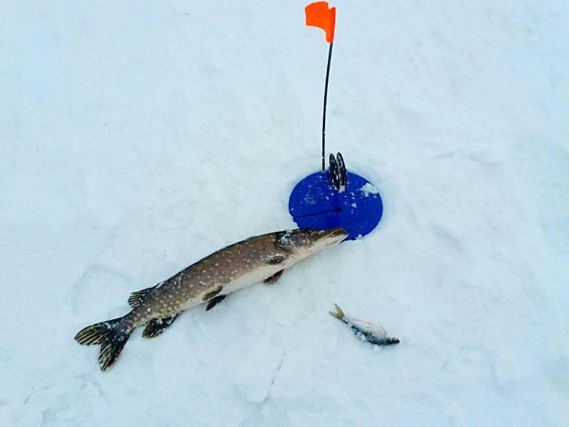 Ловля щуки на жерлицы по первому льду - поиск и оснастка