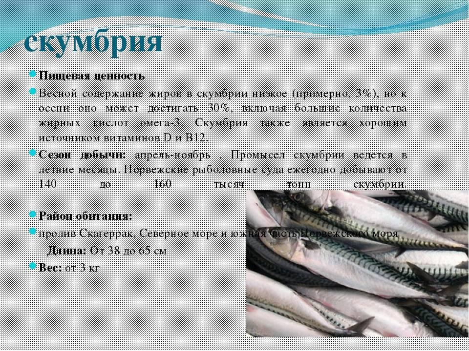 Навага жареная калорийность на 100 грамм. ценный морепродукт — навага, расскажем о ее полезных свойствах и вкусовых качествах. способы приготовления наваги - новая медицина