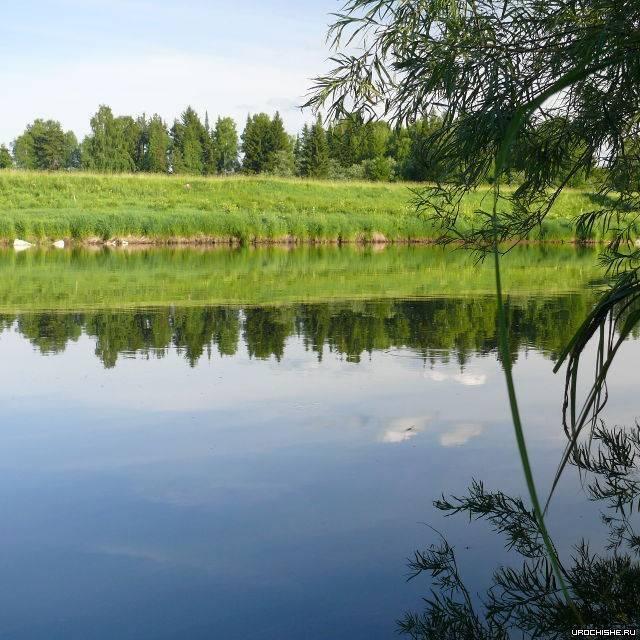 Рыбалка на реке воря в московской области, рыбные места, отчеты рыбаков