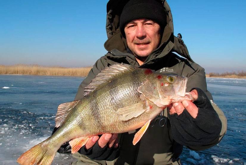 Рыбалка в водоемах тверской области: платные и бесплатные озера и пруды, лов на волге