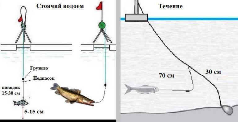 Ловля на тюльку зимой судака и берша. особенности и тактика.