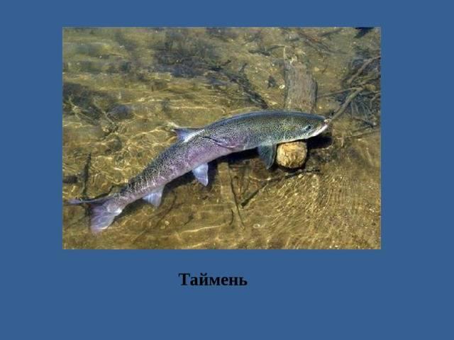 Рыбалка в ярославской области и в ярославле - fishingwiki