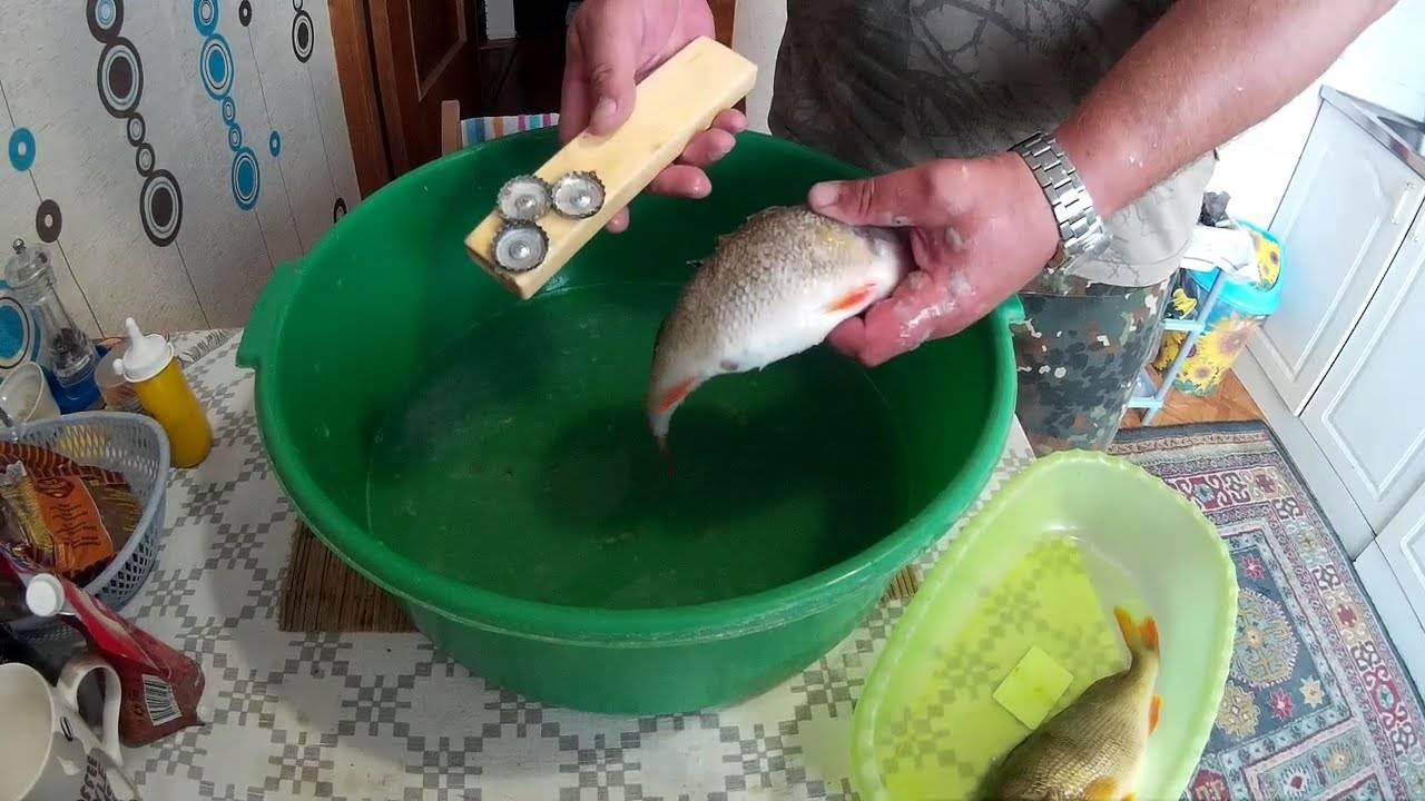 Как чистить морского окуня: надо ли чистить морского окуня от чешуи