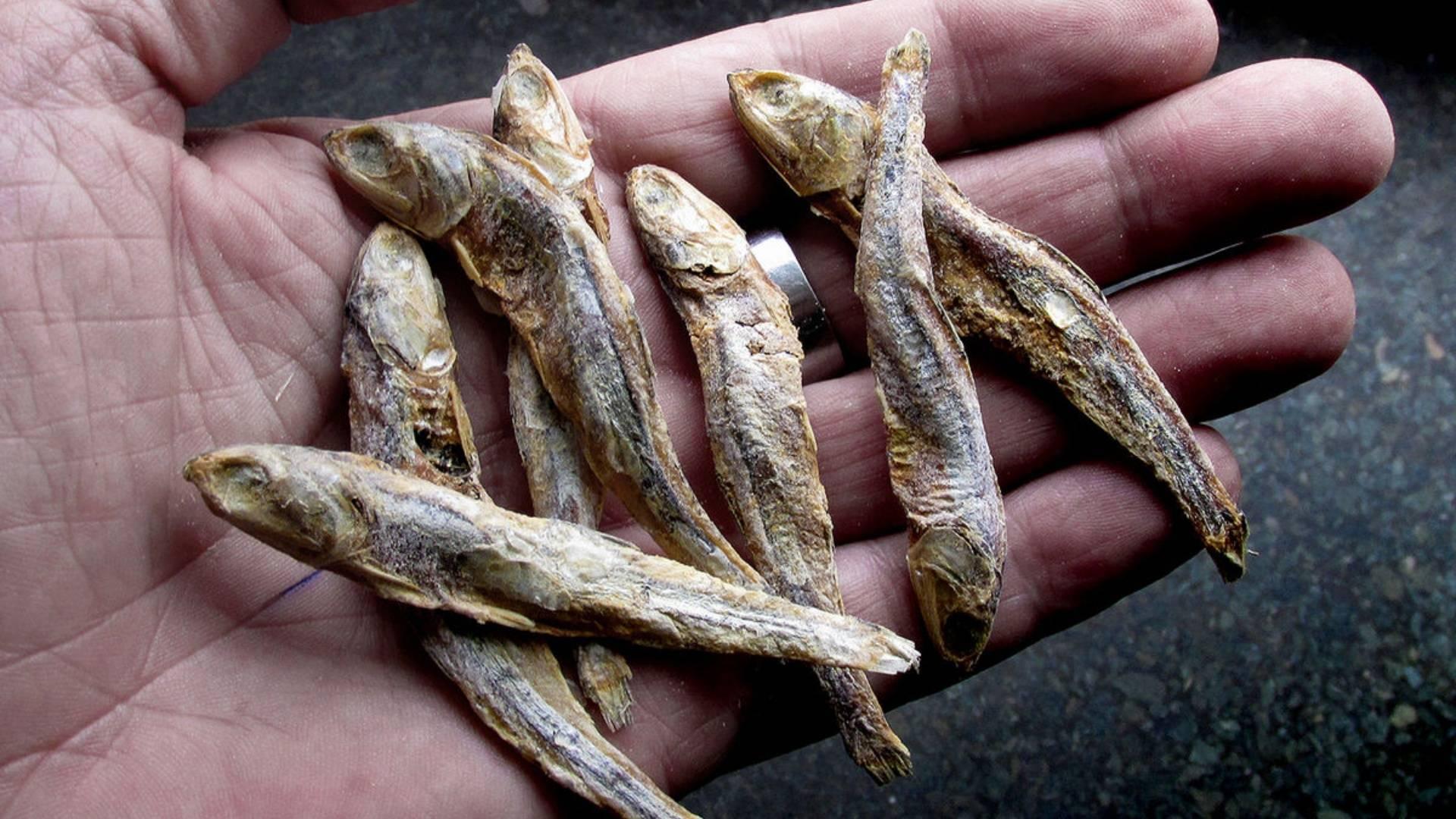 Рыба снеток (корюшка): краткое описание, особенности и рецепты