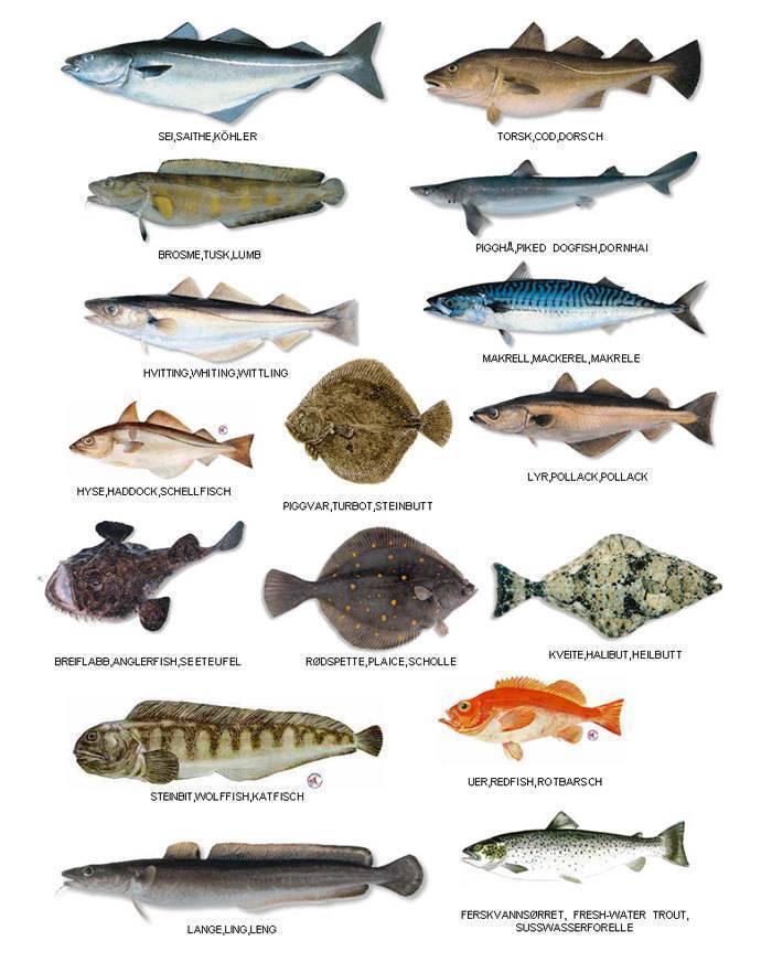 Список рыб россии с названиями и фото, морские и пресноводные рыбы российской федерации