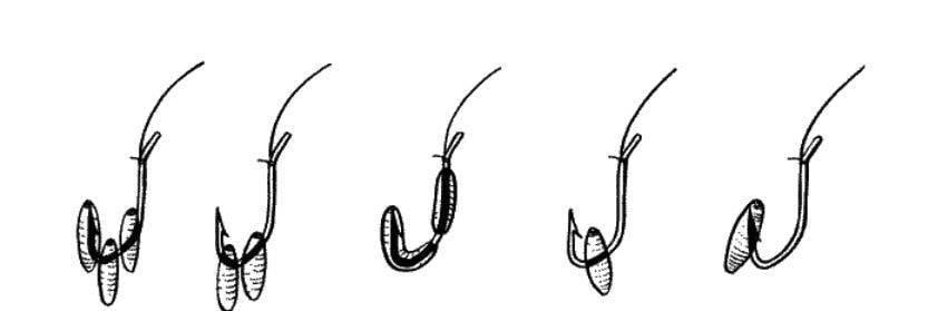 9 способов насаживания опарыша на крючок