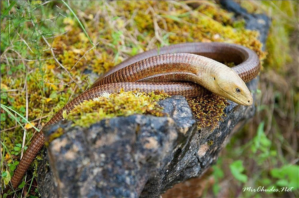 Ящерица – описание, виды, где обитает, чем питается, фото
