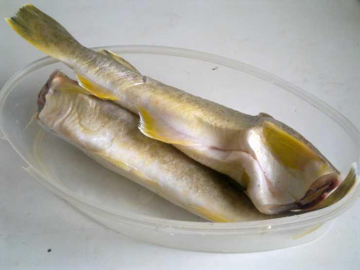 Что за рыба сайда и где она водится? – суперулов – интернет-портал о рыбалке