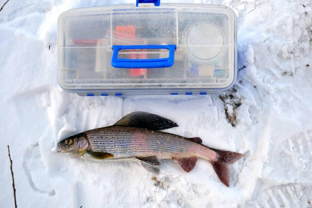 Рыбалка на енисее. где ловить и кто водится?