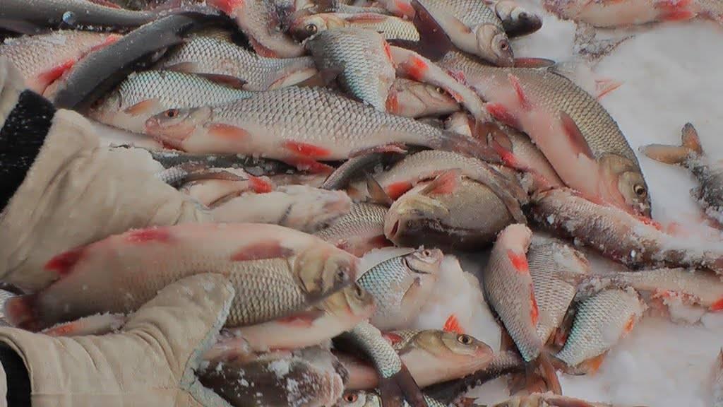 Рыбалка в ханты-мансийске: видео, как ловить лосося в селе каменное (хмао)