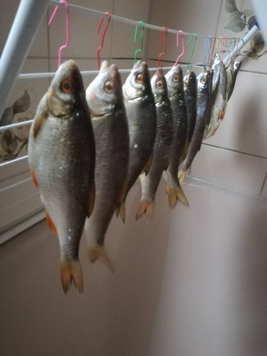 Все секреты правильной засолки и вяления рыбы в домашних условиях