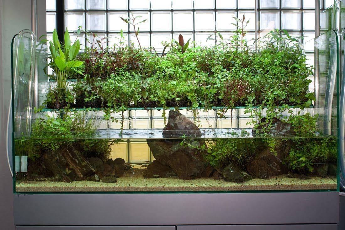 Биофильтр для аквариума: что это такое, как сделать биологическую фильтрацию своими руками, а также два варианта самодельного прибора