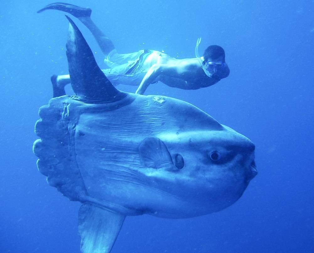 Самые удивительные, необычные и ужасные рыбы в мире