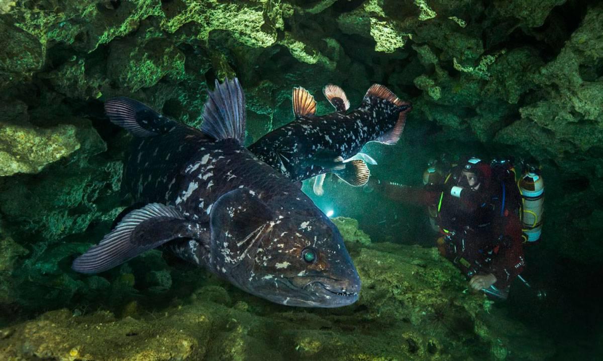 Летучая рыба: как выглядит, чем питается, где обитает